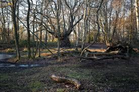 Images Epping Forest has won the awards since 2003