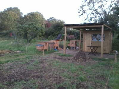 Seva Care defends allotment chickens treatment after complaints to Harrow Council