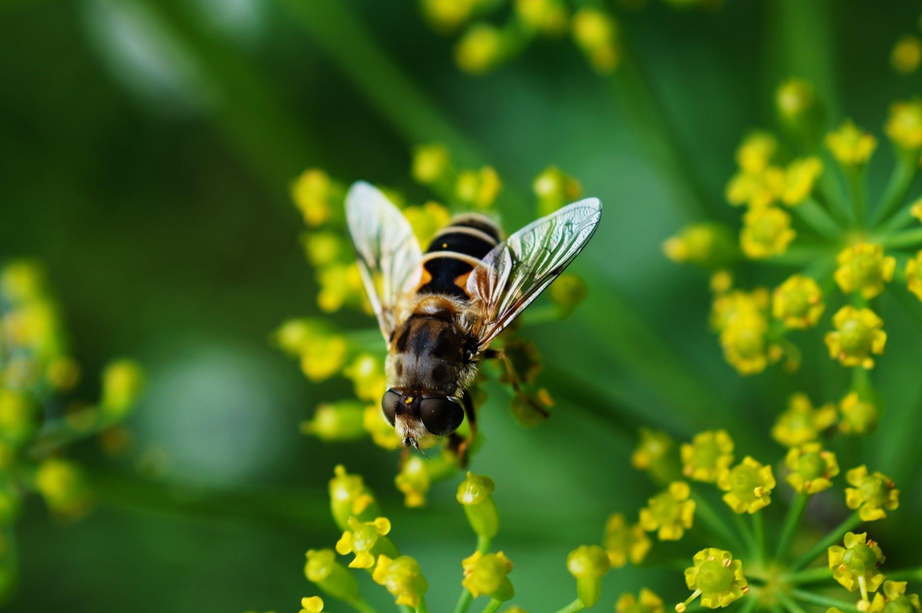 Beckenham Bee Killer: Suspect reported to authorities