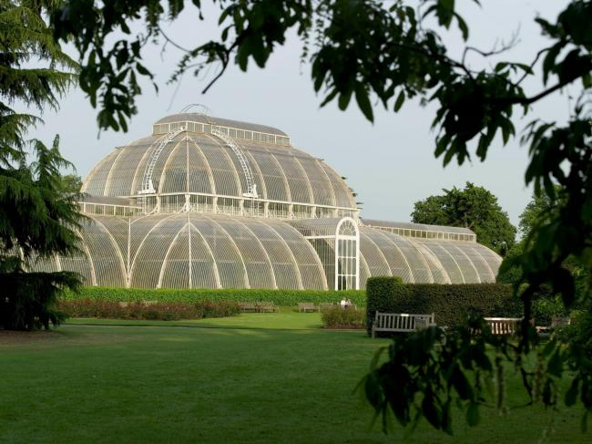 Image credited to Kew Gardens.