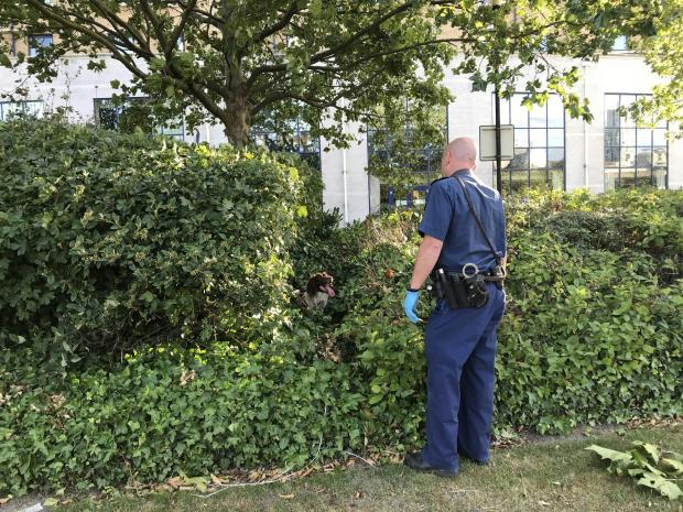 This Is Local London: A police sniffer dog with its handler searching bushes outside the Holiday Inn on Bugsby's Way, Greenwich, London, where a woman has died after being stabbed.Luke Powell/PA Wire