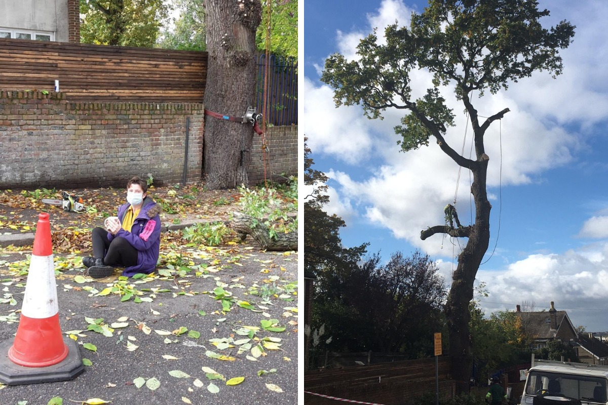 Croydon woman sits in road to protest tree felling
