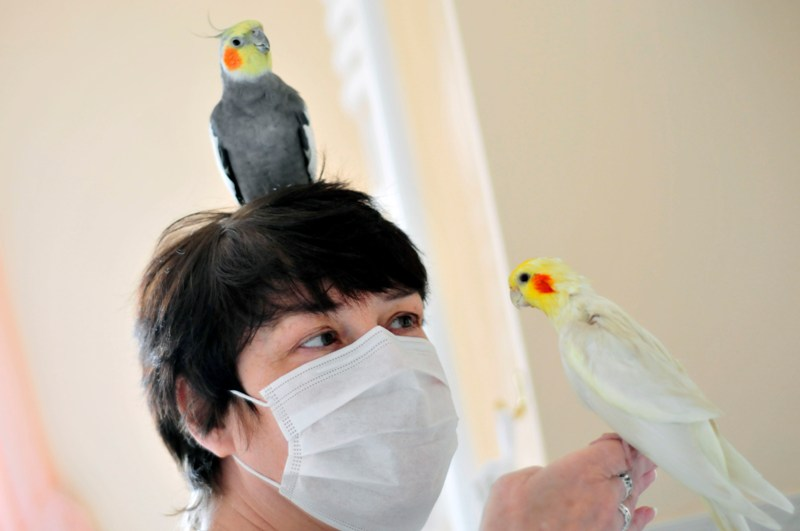 "EPS+video: Woman forced to re-house ""disabled"" birds after allergic reaction"
