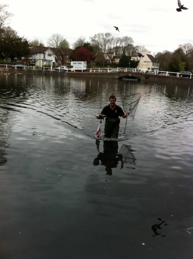 Adam Briddock leaving the ponds after rescuing the bird in Carshalton