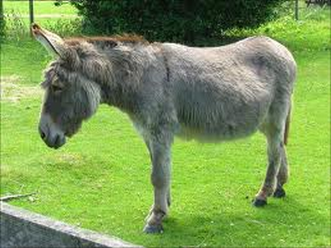 Do you have a spare donkey?