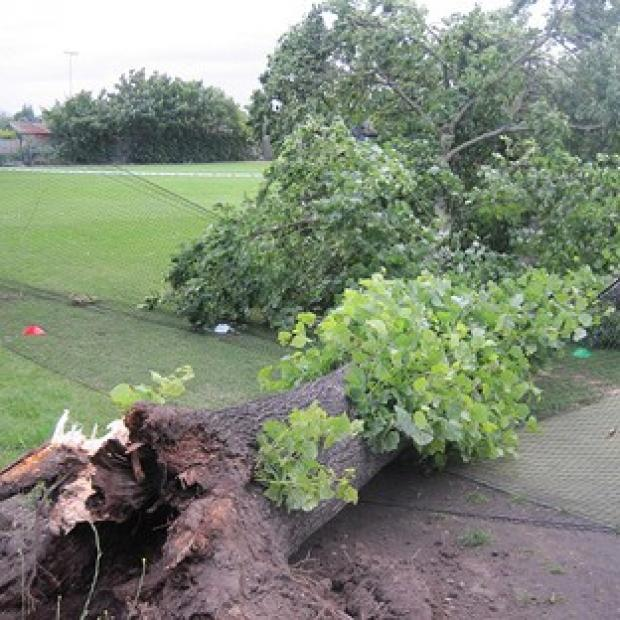 The fallen tree at Spencer Cricket Club in Earlsfield