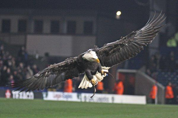 The Selhurst Park Eagle will be entertaining the crowd at the club's community day