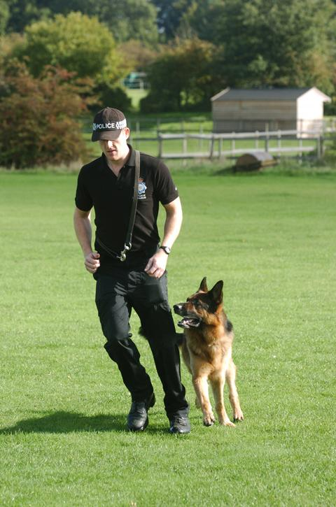 Could you be a police puppy walker?