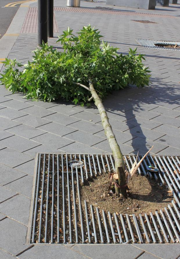 Five trees have been vandalised since the work in Station Road last year.