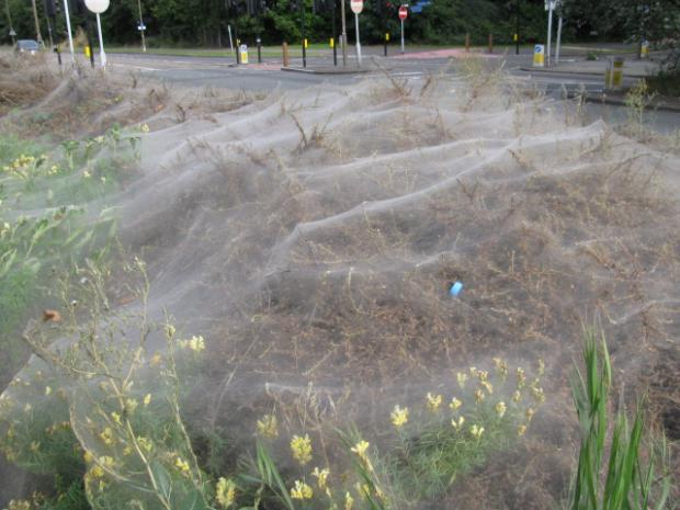 Giant web discovered in Thamesmead