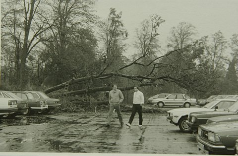 Storm 'devastation' from 1987 remembered