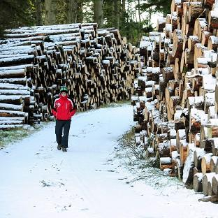 A man walks past snow covered logs at Kielder Water, Northumberland, after snow fell across parts of the country