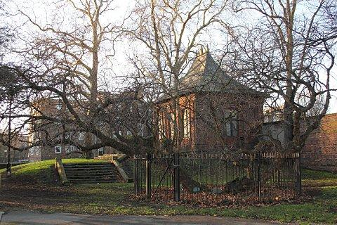 Ancient Mulberry tree in Charlton Park, picture courtesy of Carol Kenna