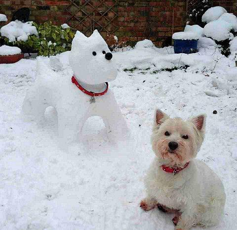 Joe Tooze's snowdog and six-year-old Westie Sally