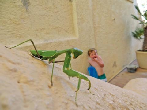Scary: Terrifying Mantis