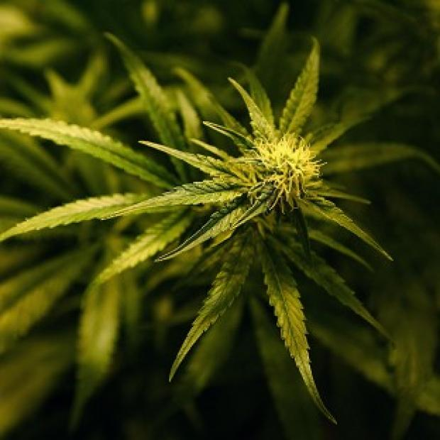 A teenage summoned to court for possessing cannabis worth 50p took his own life