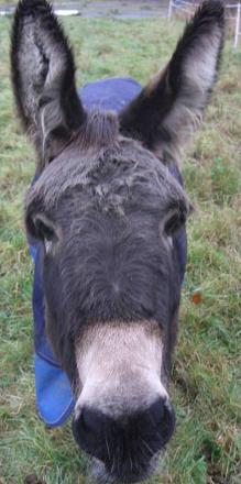 Donkey set for opera stage stardom