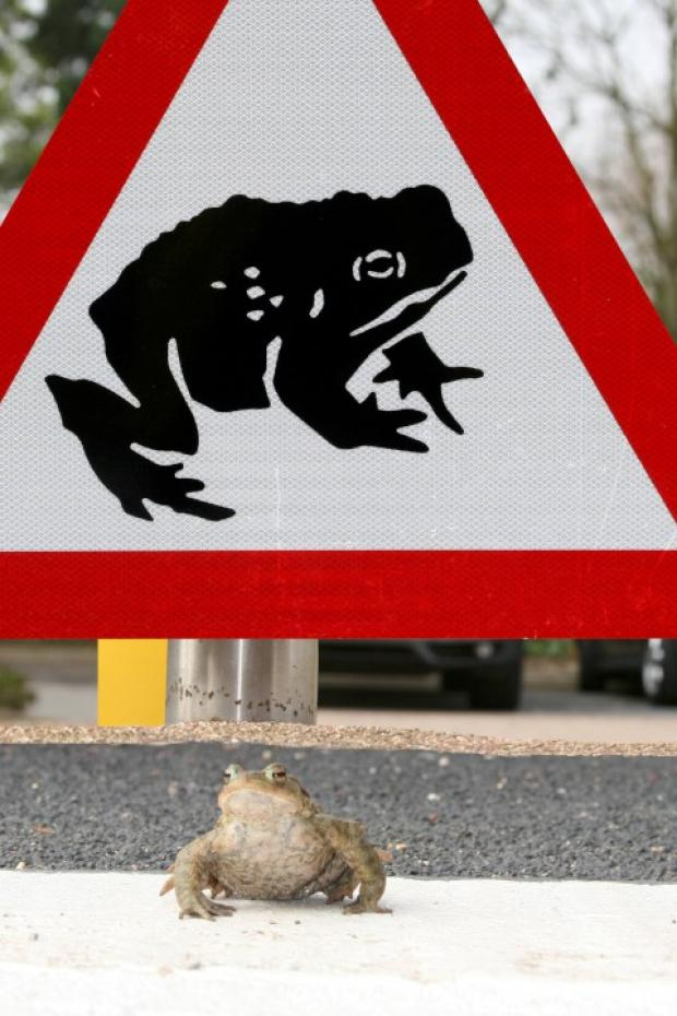 Warning: Toads need access to their natural spawning grounds