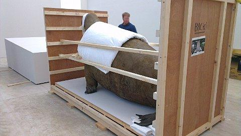 This Is Local London: The walrus arrives in Margate (pic by Turner Contemporary)