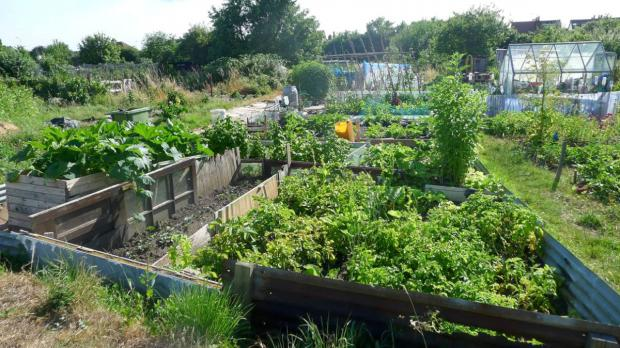 Allotments: A pleasure at a price