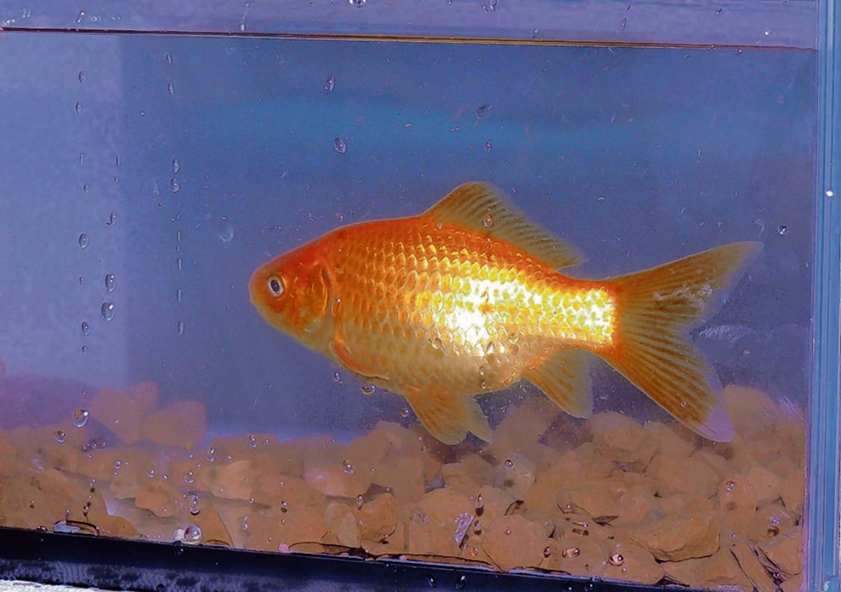 A builder tried to blame the death of his goldfish for being late with his tax return