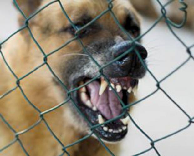 Dogs face destruction if their owners do not comply with Contingency Destruction Orders