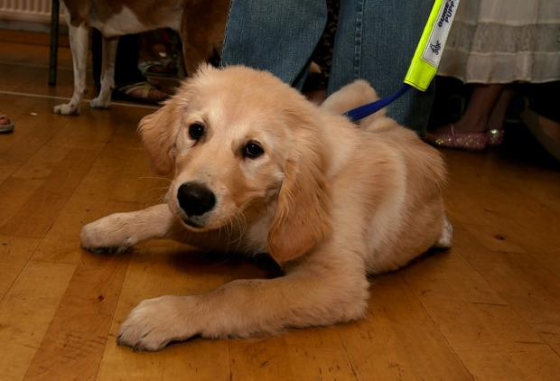 Guide dogs to benefit from classical concert at Kingston University