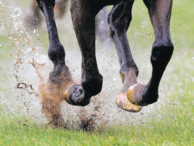 A young horse's hoof grows at a rate of about half an inch a month