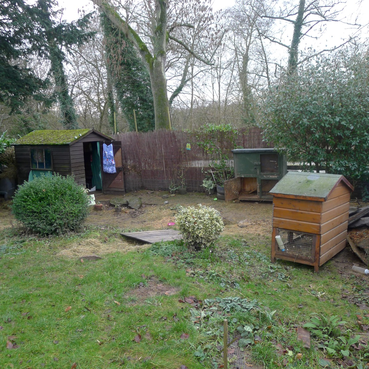 Hutches remain empty after the frantic rescue mission on Christmas Eve