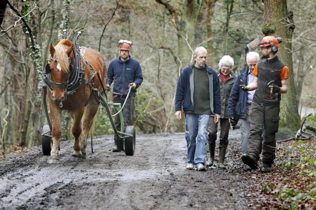 Roy, a Suffolk horse, is helping to clear the ground in Queen's Wood to encourage more wild flowers to grow. He is joined by Under Woodsman Iain Loasby, Councillor John Bevan and John Dorken and Alison Watson