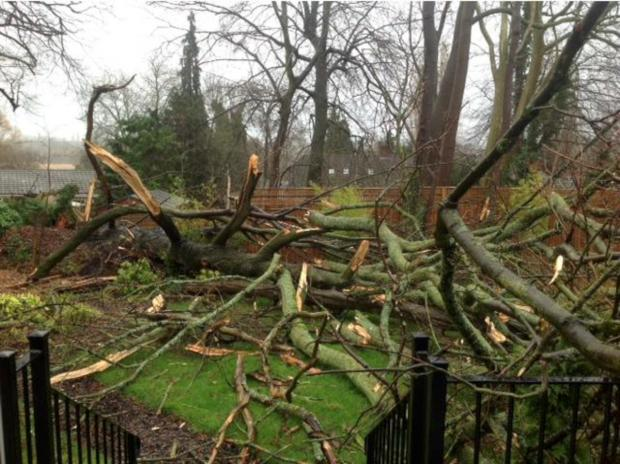 Trees crashed down in Hawks Hill Close, Fetcham. Photo: Ian Anderson