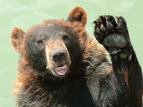 This Is Local London: Bear waving