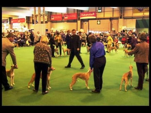 Dog day: Crufts is nearly upon us