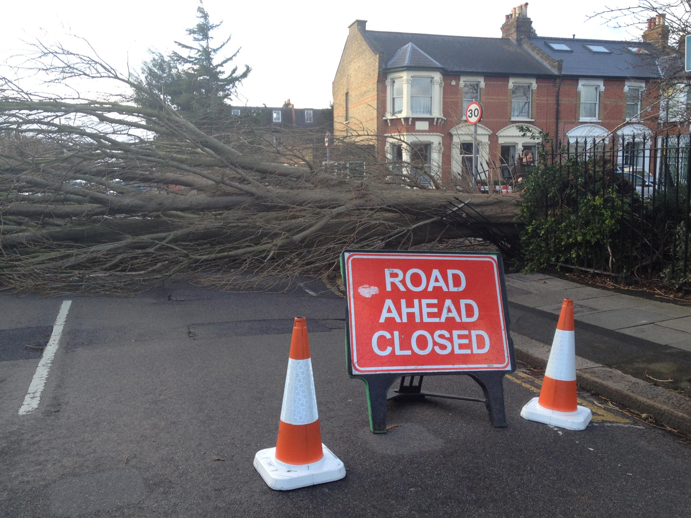 The tree fell from South Park Gardens, Wimbledon, in Trinity Road