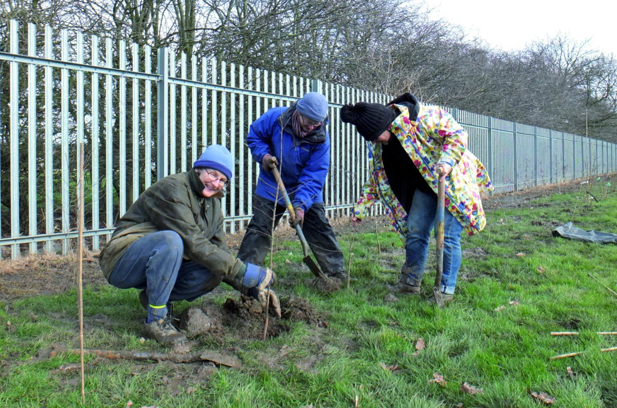 Ruth Baber of Sustainable Merton, Jane Swann White of the Tree Wardens and Margaret Lipscombe of the Tree Council planting the fruit hedge