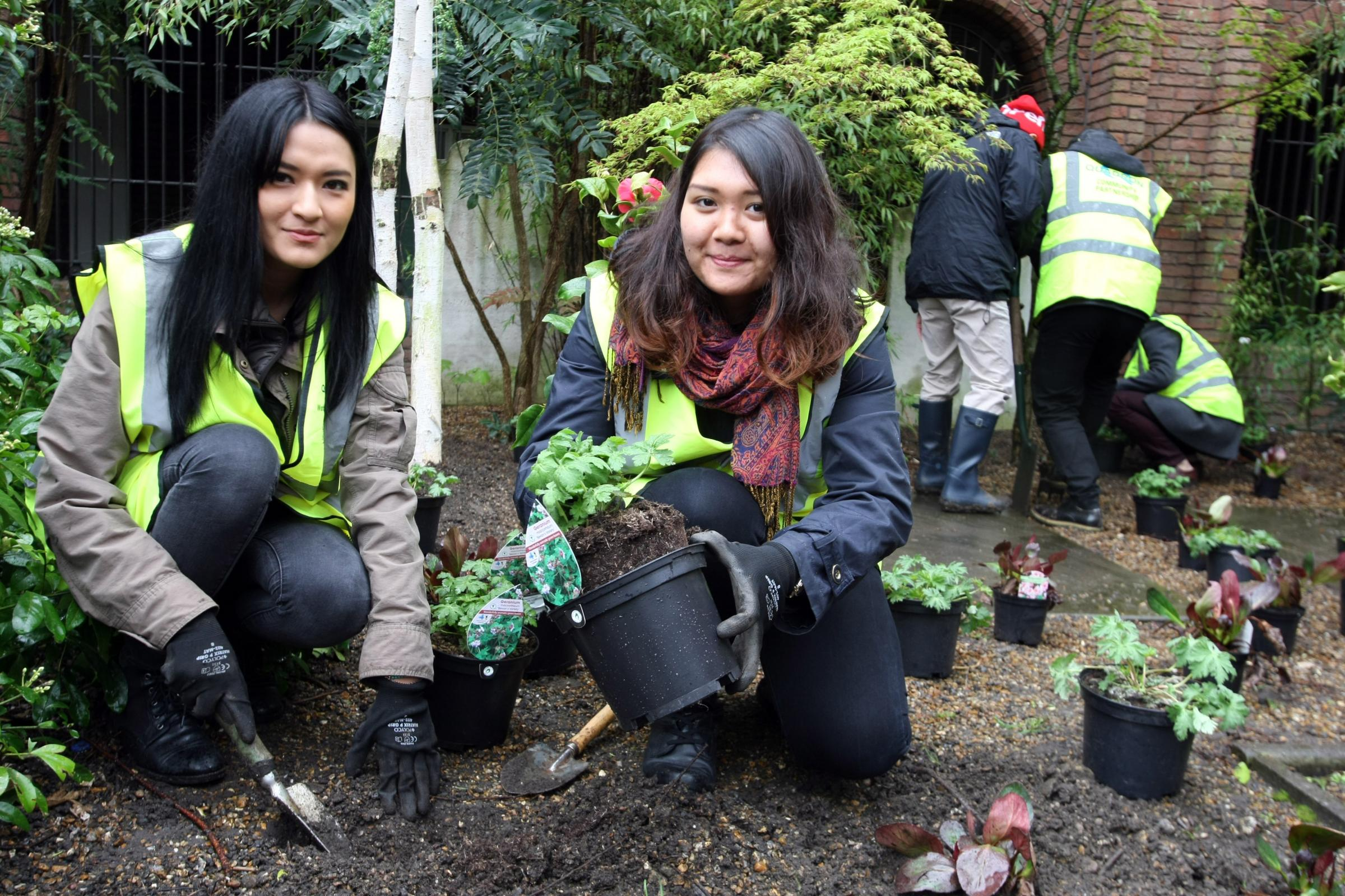 Pink, purple and blue will take over Kingston's Memorial Gardens thanks to Kingston University students