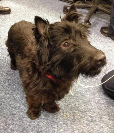 Cute dog missing owner handed in at Beckenham police station
