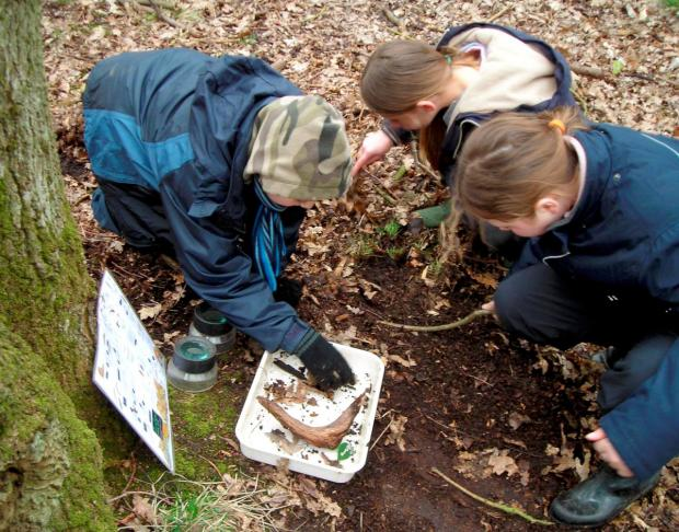 Bug hunting: And other fun available at Esher Common