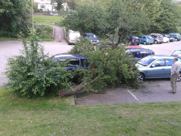 This Is Local London: The tree fell on top of three parked cars in Church Hill Road car park.