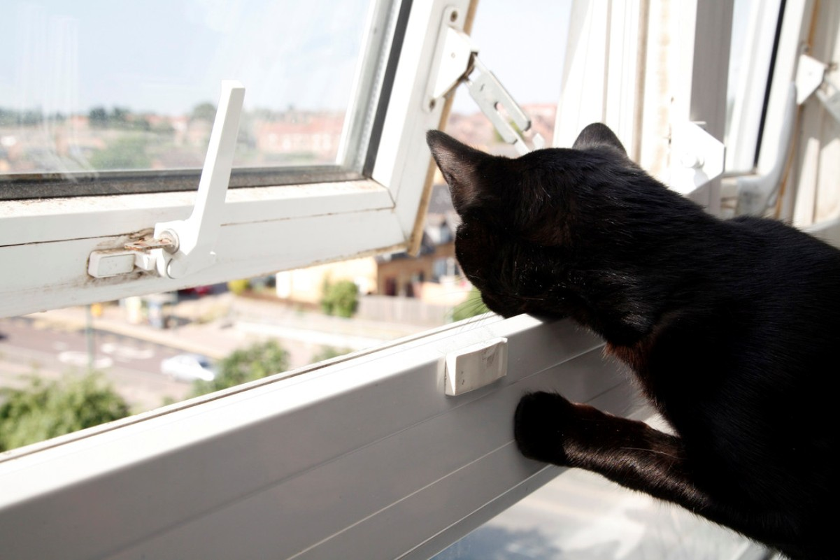 Super Bruce - miracle moggy survives 70-foot fall out of Erith tower block window