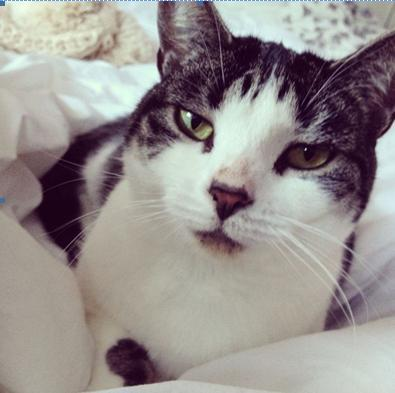 This Is Local London: Sadie is Pet of the Day