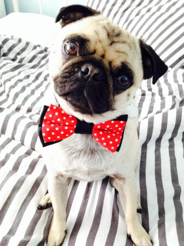 Pet of the Day: Dexter the dapper doggy
