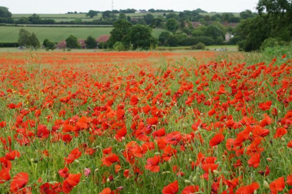 Candlelight vigil planned in Bromley to commemorate the outbreak of the First World War