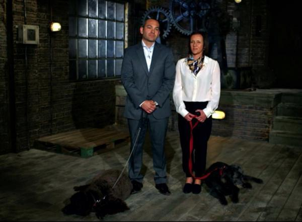 'Made for dogs, not dragons' - pet grooming company fails to reach finals of TV show