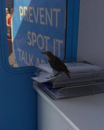 The bird was first in line for a check up this morning