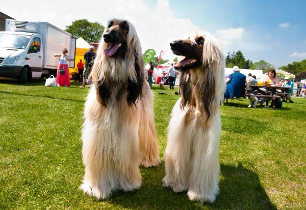 WIN! Family camping passes to Paws in the Park at the Kent Showground