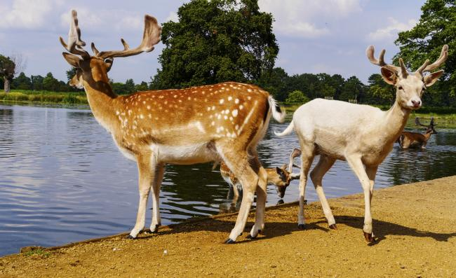 Beautiful Bushy Park makes a great family day out