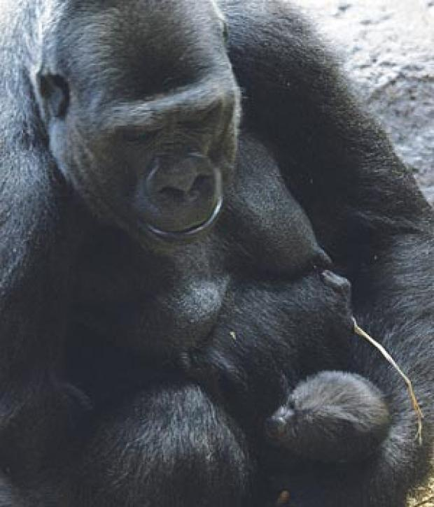 Doing fine: Shani cuddles baby Kumi. Deadlinepix CG2341-C