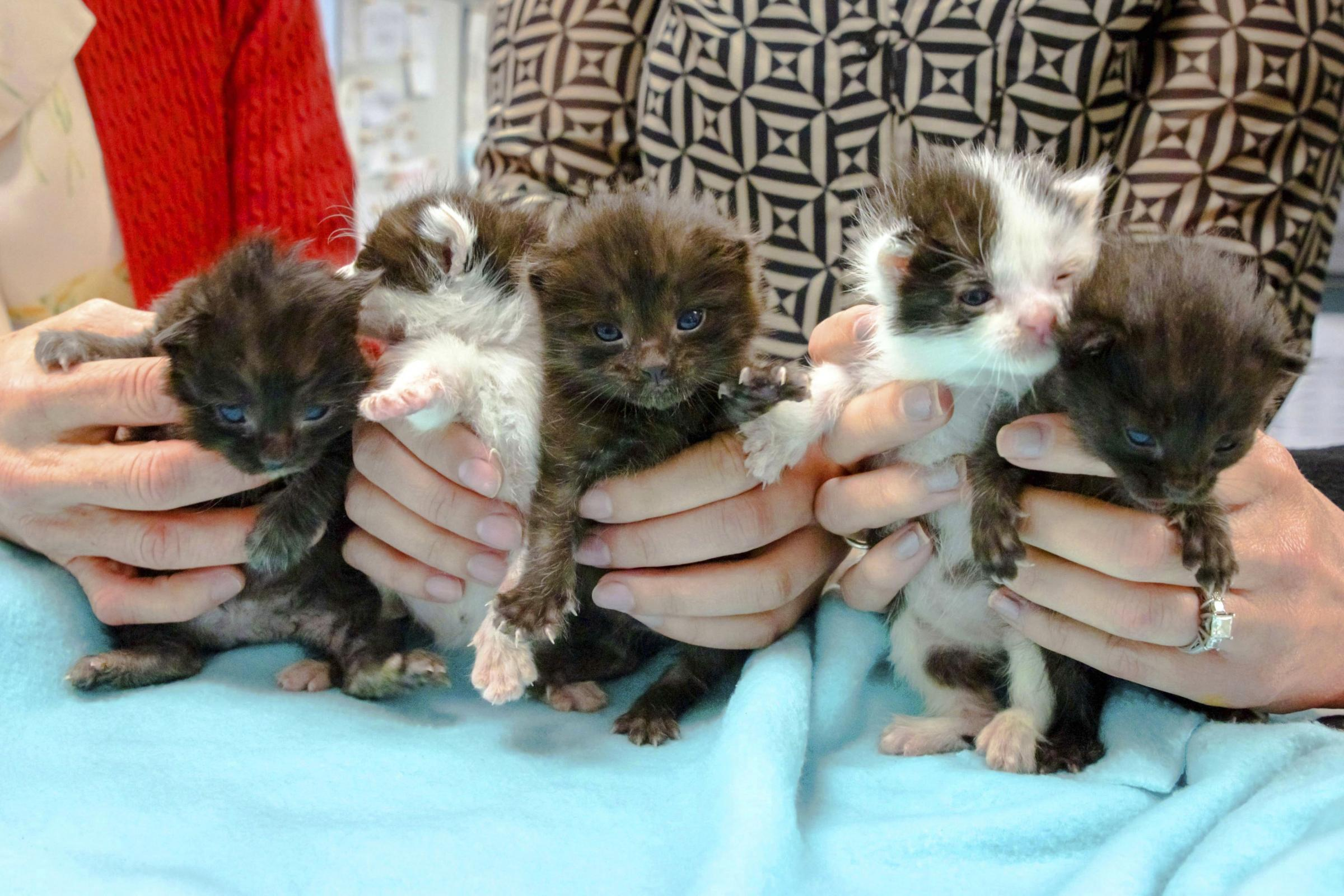 The five kittens stowed away inside a steel column on a 400-mile trip to San Diego