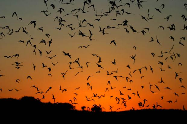 This Is Local London: WOODFORD GRN: Go batty for bats
